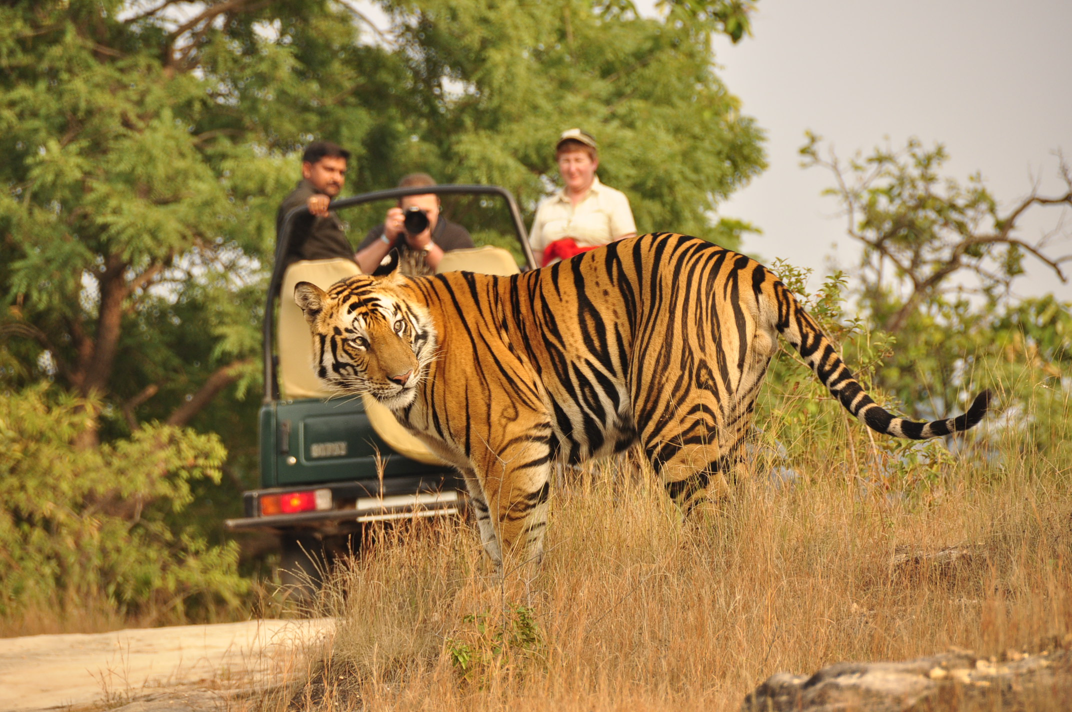 Pench India  city pictures gallery : Tiger Safari Tour India Ranthambore, Bandhavgarh, Kanha, Pench